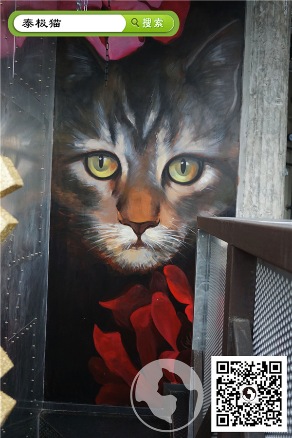 3d宠物猫墙绘素材图片